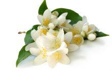¿Qué sería de este mundo sin el perfume de una flor?