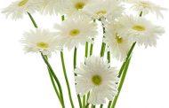 17 plantas de interior purifican el aire según la Nasa