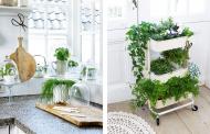 5 plantas que no deben faltar en tu cocina