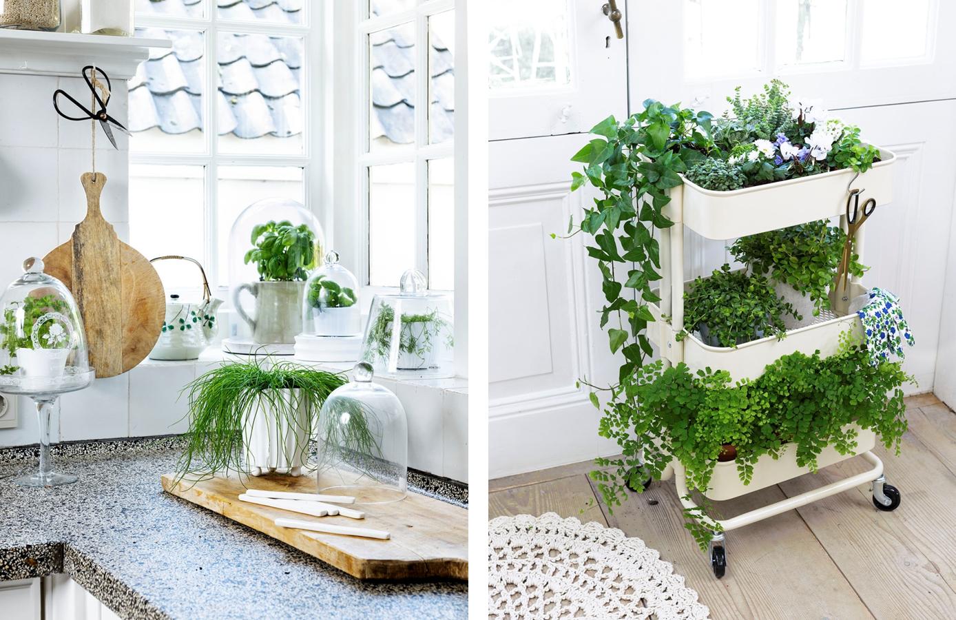 5 plantas que no deben faltar en tu cocina beniverd viveros for Decoracion de patios pequenos con plantas