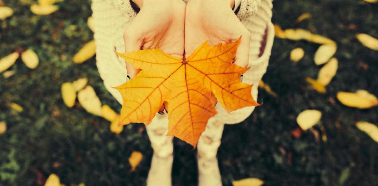 ¿Las hojas secas ensucian nuestros parques y jardines?