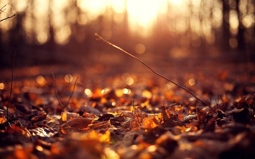 El jardín de otoño, un espectáculo para los sentidos