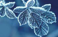 ¿Cómo proteger nuestras plantas del frío?