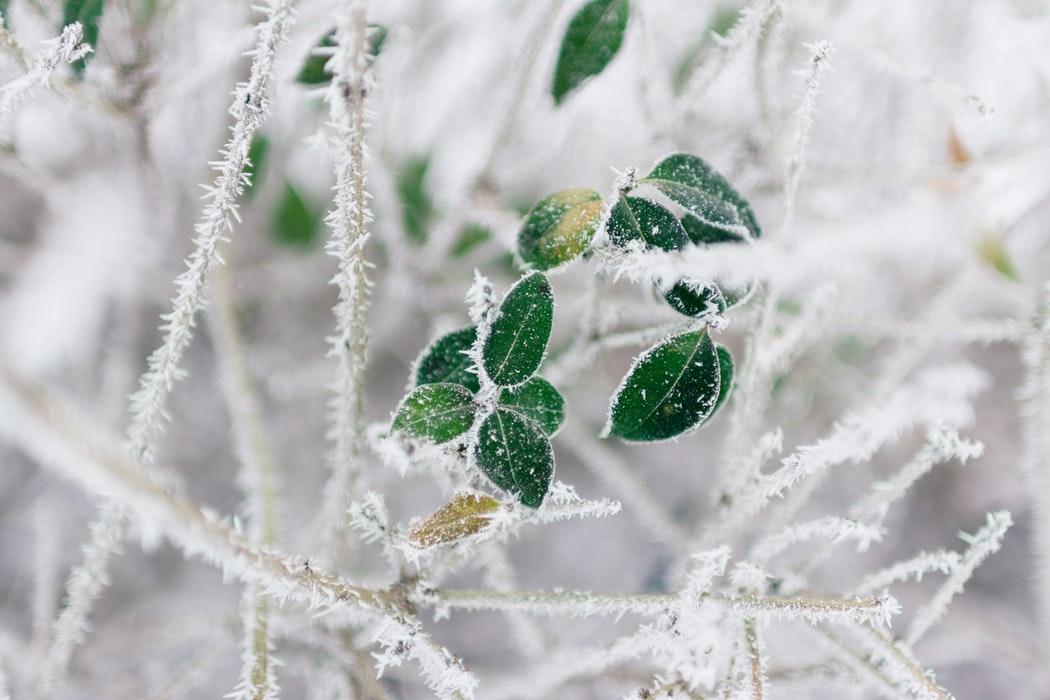 Enero en el calendario del Jardinero