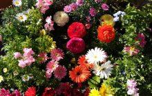 El asombroso lenguaje de las flores