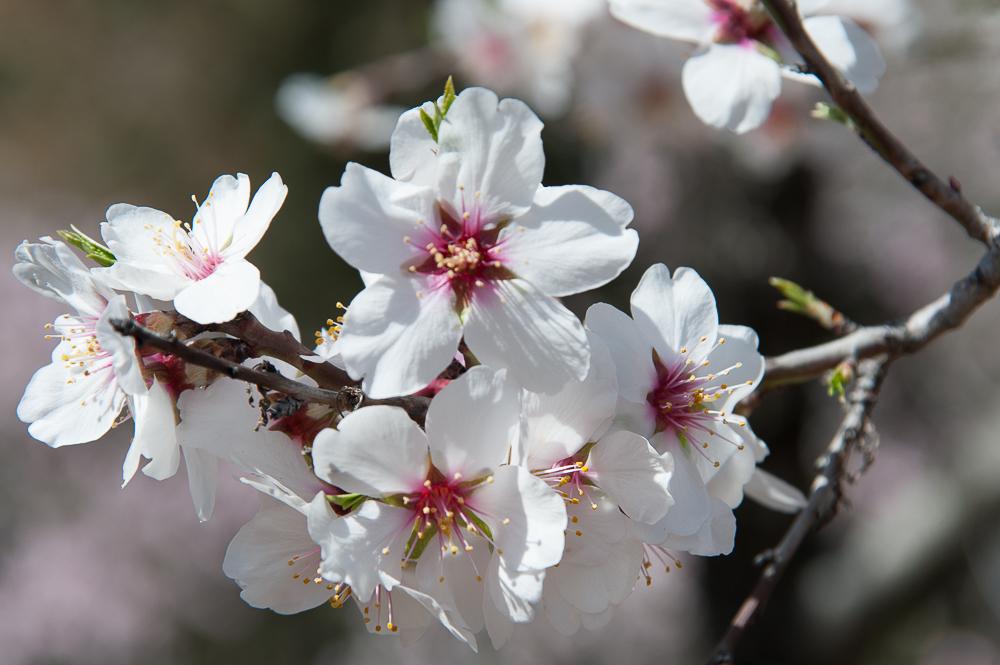 Febrero en el calendario del Jardinero