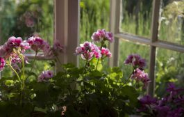 Abril en el calendario del Jardinero