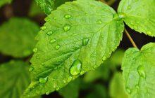 ¿Cómo proteger nuestras plantas del calor?