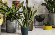 Plantas de interior que son tendencia