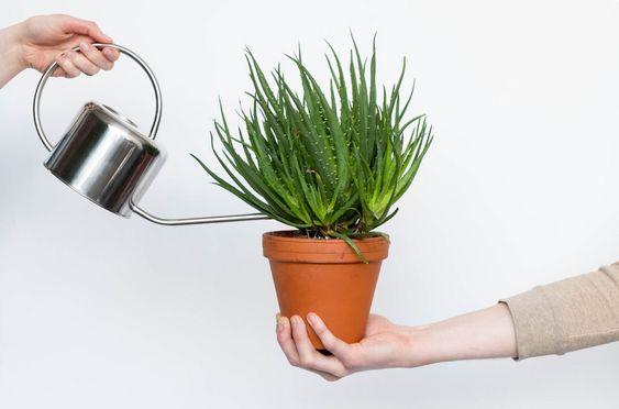 Errores más comunes en el cuidado de las plantas