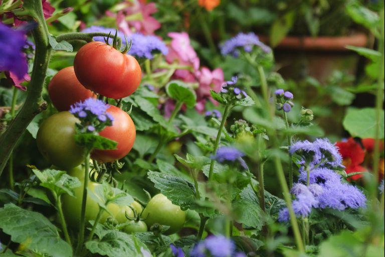 5 plantas que no deben faltar en tu huerto