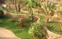 Podas y tratamientos fitosanitarios en palmeras
